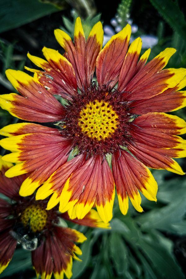 A Beautiful Road Flower thumbnail