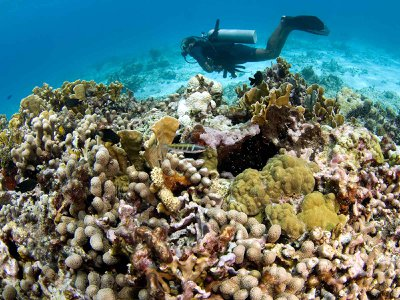 Small family-run dive tour operations in Mexico have been found to give more back to their communities than large foreign-owned businesses.