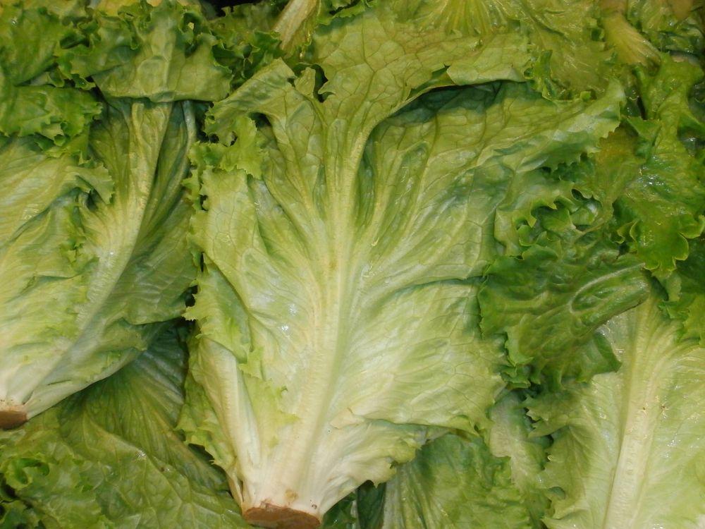 Lettuce_in_a_stack.jpg