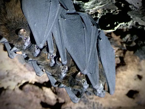 Six Bats thumbnail