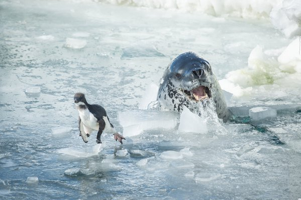 Threat under the ice thumbnail
