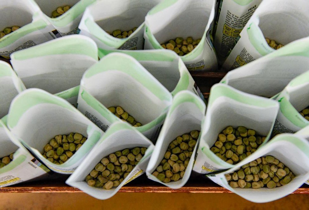 packets of pea seeds