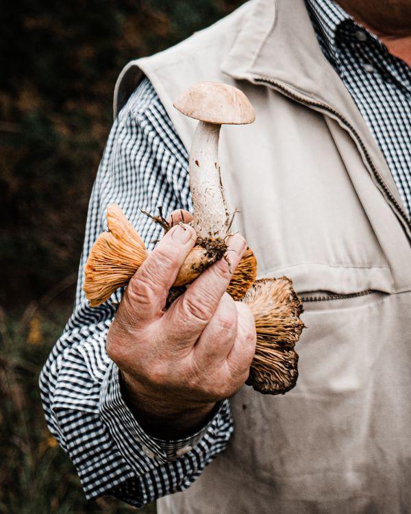 Collecting mushrooms thumbnail