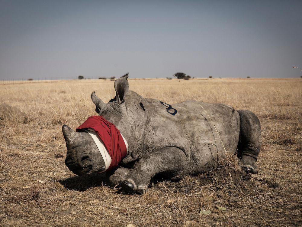 Game abundant, especially rhinoceros