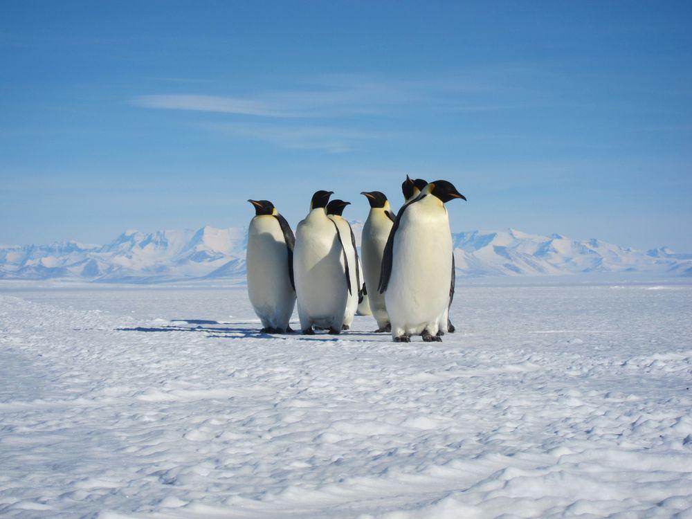 01_09_2014_penguins.jpg