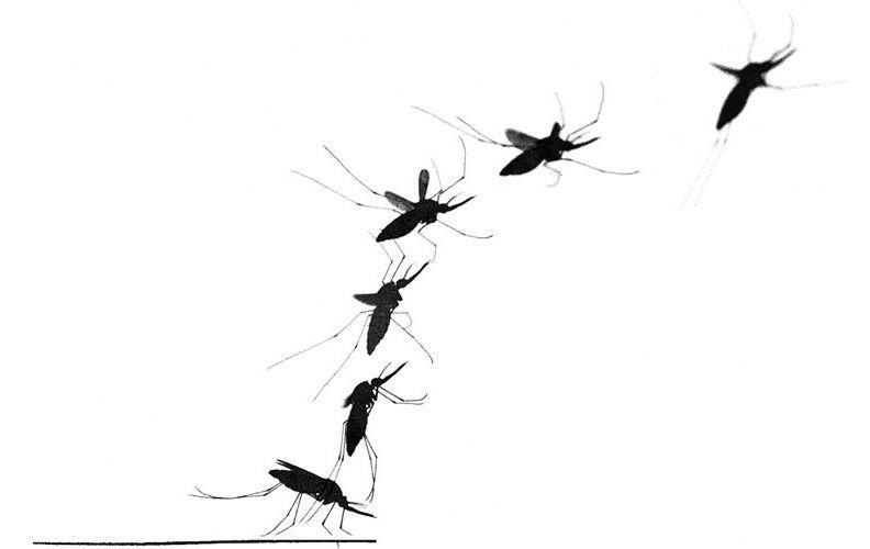 Mosquito Takeoff