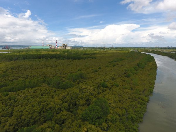 Mangrove eco park thumbnail