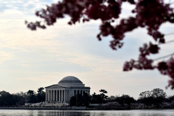 Jefferson Memorial and the Tidal Basin during the cherry blossoms thumbnail