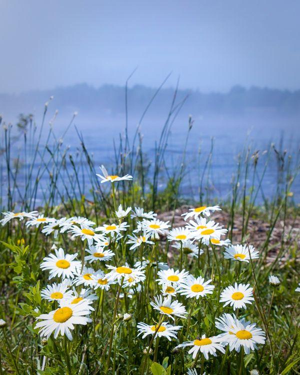 White flowers thumbnail