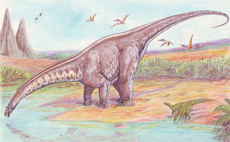A restoration of Apatosaurus