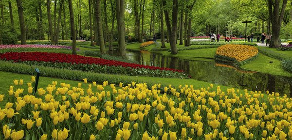 Tulips in Keukenhof Gardens. thumbnail