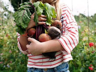 Beets can be used to dye fabric red or pink.