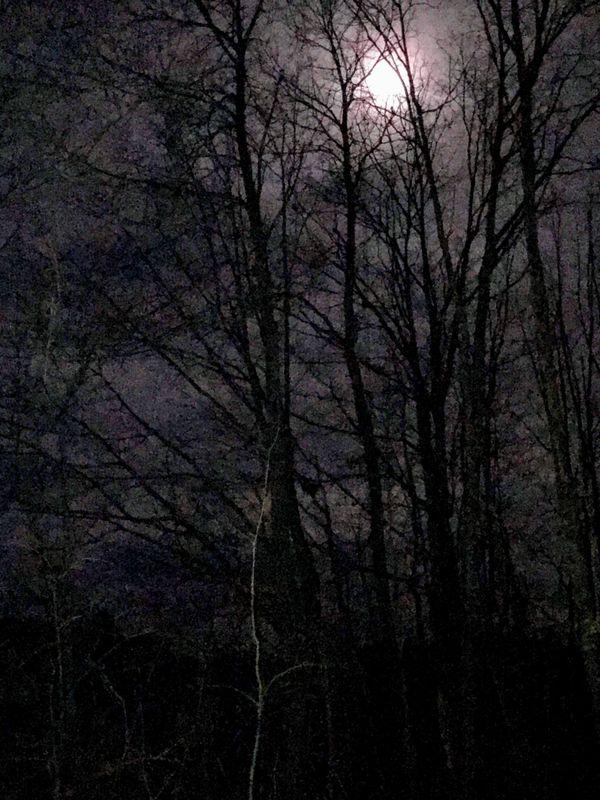 Moonshine thumbnail