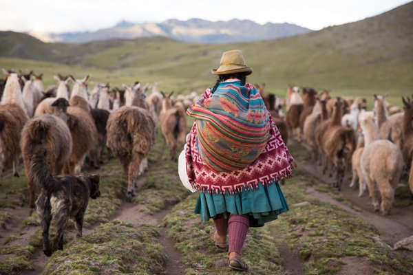 Wool providers of the High Andes thumbnail