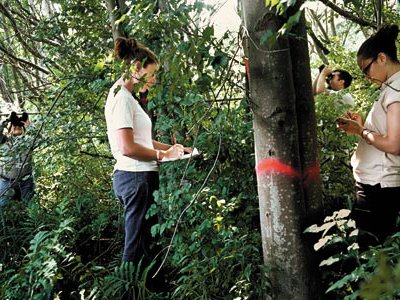 Researchers search for Asian longhorned beetles among Worcester's hardwoods.