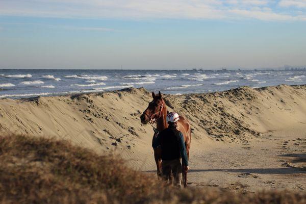 HORSE ON THE SEA thumbnail