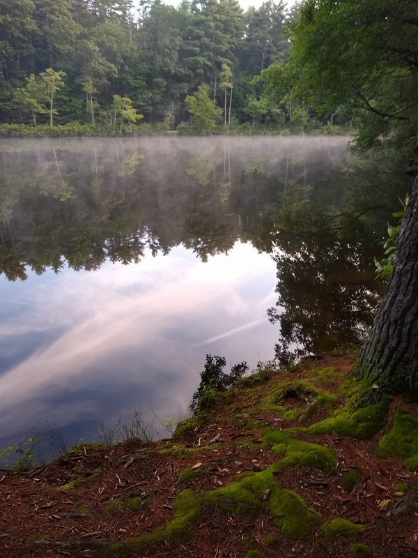 Morning Reflections on Fields Pond thumbnail
