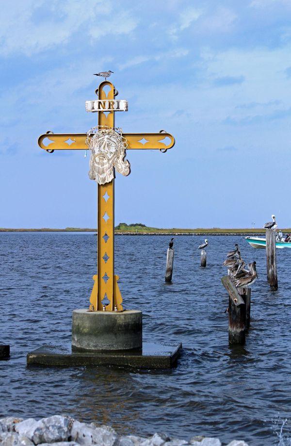 Katrina Cross and Pelicans thumbnail