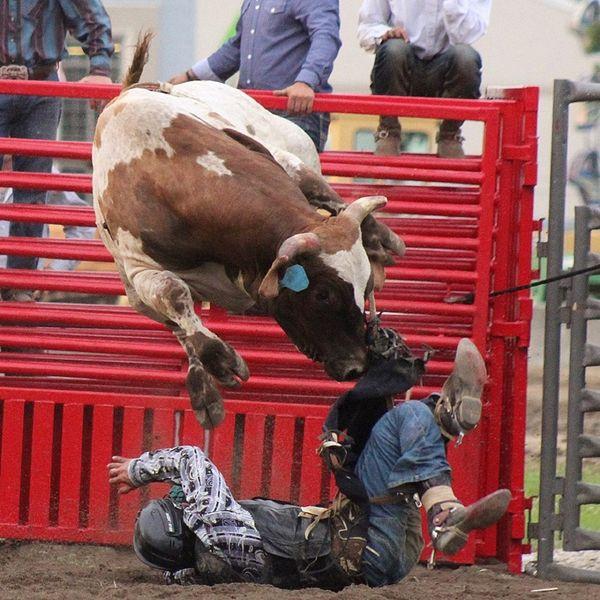 Bull Rider Fail thumbnail