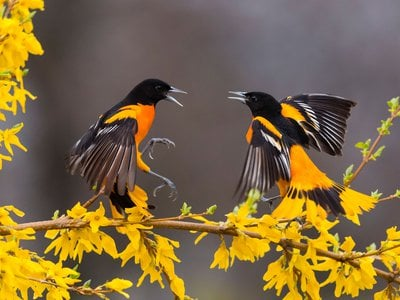 Birds are considered an indicator species, representing the health of entire ecosystems.