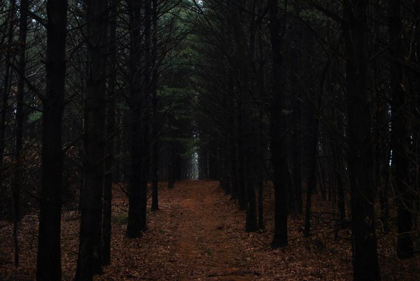 Dark Path thumbnail
