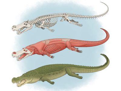 An illustration of the 30-foot-long, dinosaur eating crocodilian Deinosuchus.