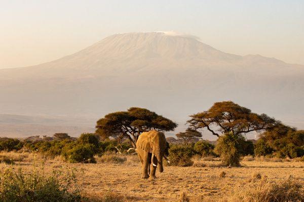 Amboseli elefant thumbnail