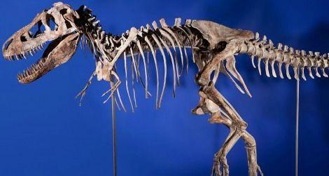 20120522094012tarbosaurus-skeleton.jpg