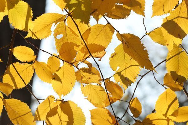 The autumn leaves thumbnail