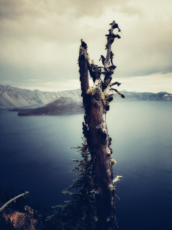 A dying tree overlooking Crater Lake thumbnail