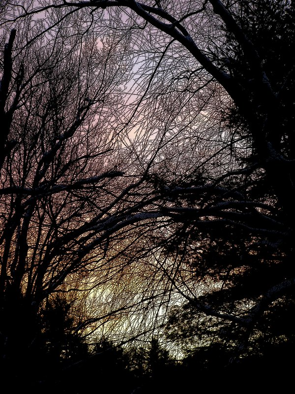 Spiderweb of branches against a winter sky thumbnail