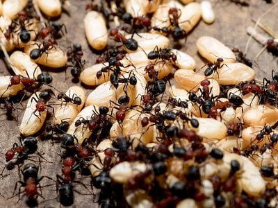 Signals from other workers can tell ants when and where to fan out and search for food.