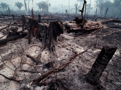 The remains of slash-and-burn land clearing in Rondônia in 1985.