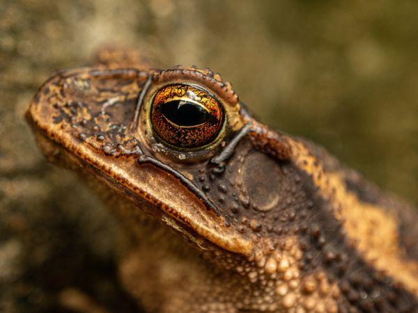 Close Up Toad thumbnail