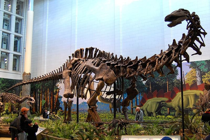 20110520083236Carnegie-Apatosaurus.jpg