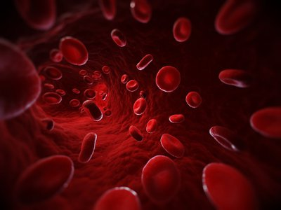 Computer illustration of red blood cells in a blood vessel.