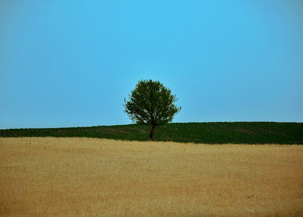 Alone on a wheat field thumbnail