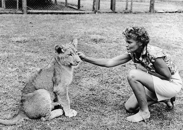Elsa the Lioness