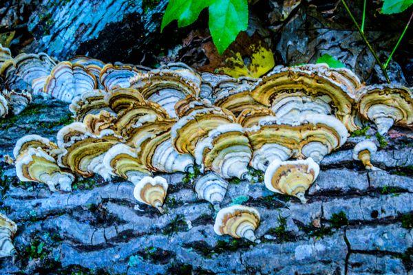 Funky Fungi #2 thumbnail