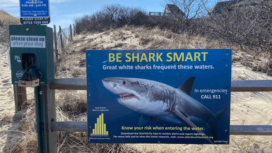 Can New Tools Help Beachgoers Predict the Likelihood That a Shark Is Nearby?