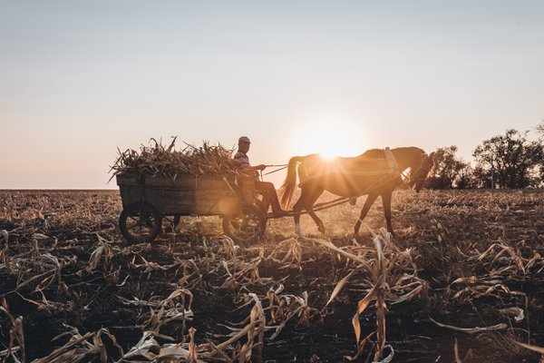 Sunset while a farmer works in a corn field in Gagauzia thumbnail