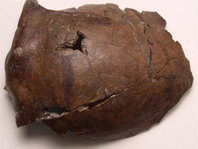 The Aitape skull