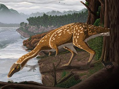 An artist's rendering of what an elaphrosaur may have looked like.