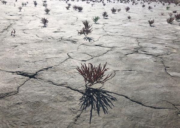 Anchorage mud flats thumbnail