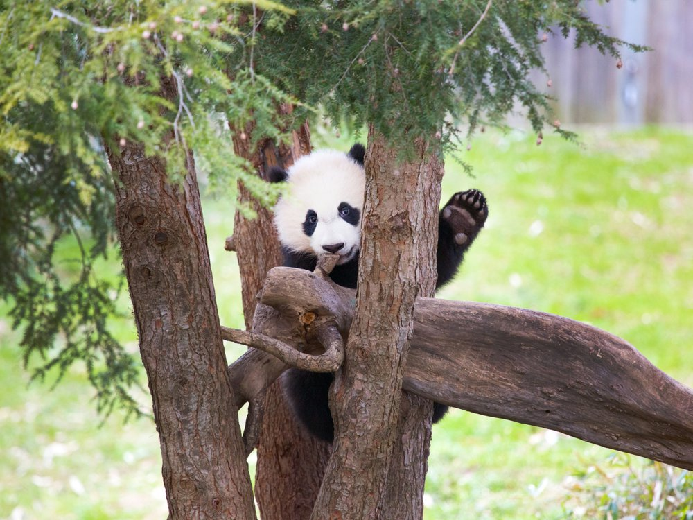 Bei Bei waves from a tree