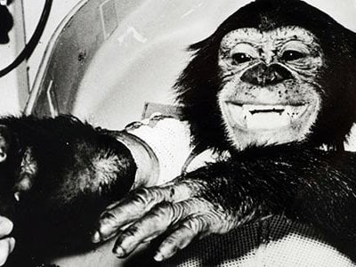 In 1961, HAM the chimpanzee became the first upright hominid to go into space.  After his death in 1983, he was interred at the New Mexico Museum of Space History.