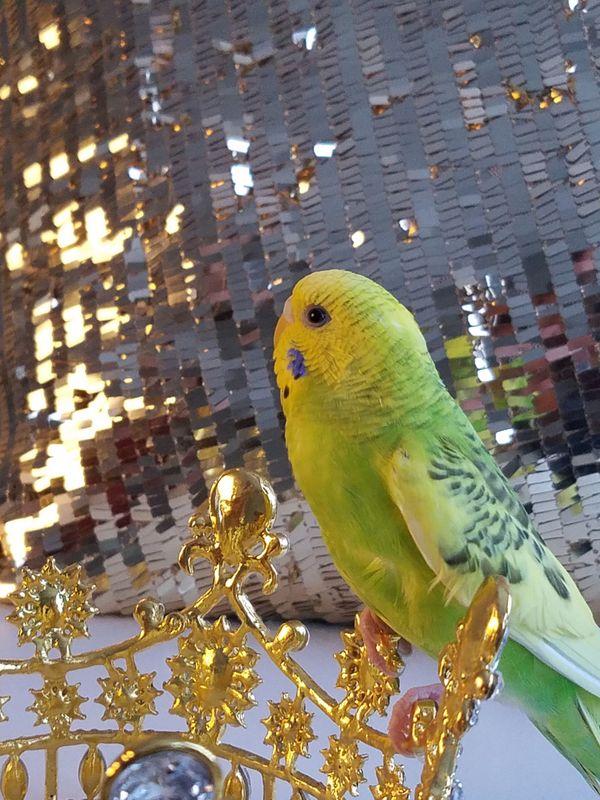 Golden Bird thumbnail
