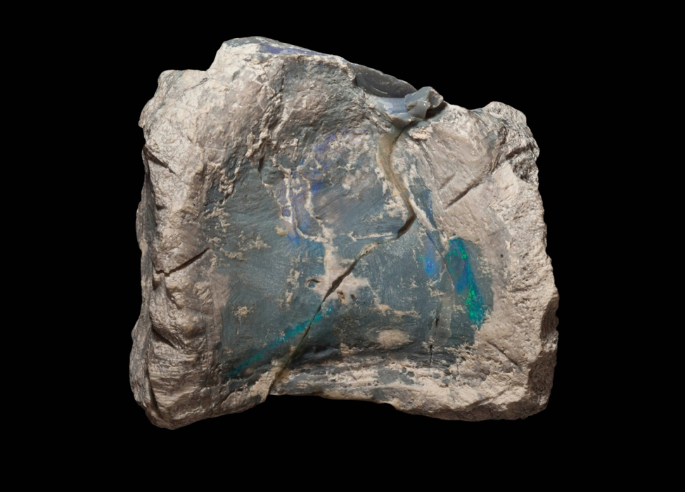 Dinosaur Bones Shimmering With Opal Reveal a New Species in Australia