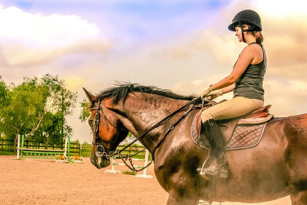 texas equestrian ready to go thumbnail