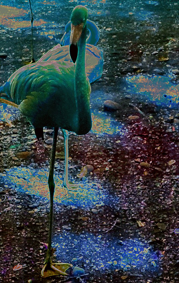 Pink flamingo altered into colorful art thumbnail